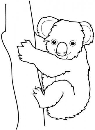 Dibujos de koalas  KOALAPEDIA