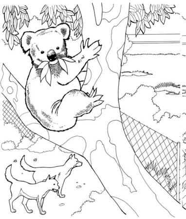 dibujo de koala para colorear